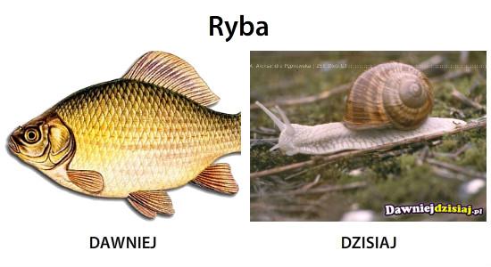 Ryba –