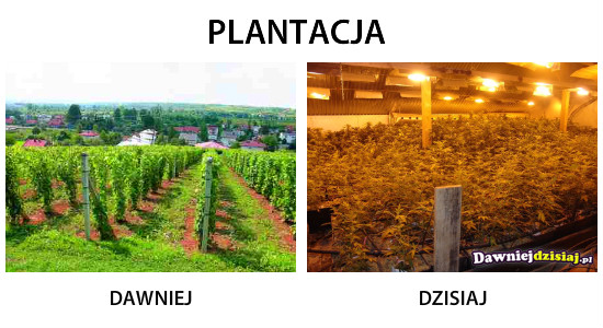 PLANTACJA –