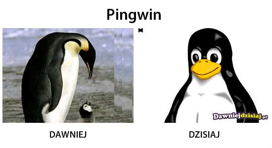 Pingwin –