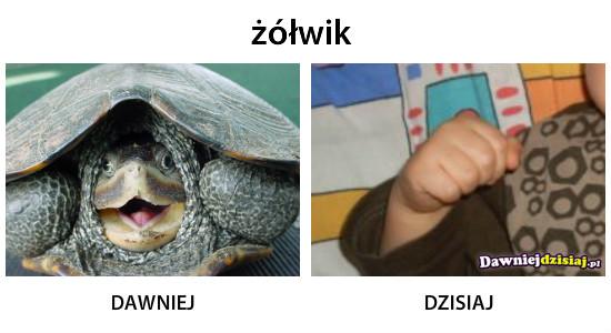 żółwik –