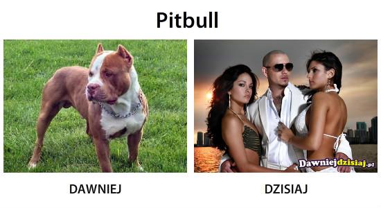 Pitbull –