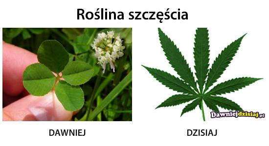 Roślina szczęścia –
