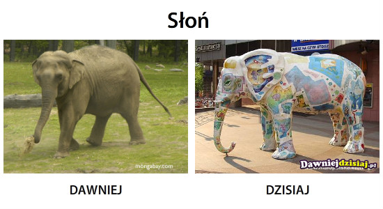 Słoń –