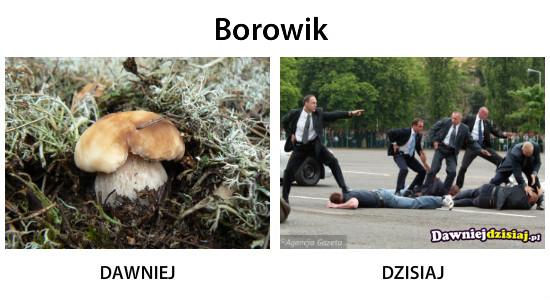 Borowik –