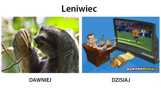 Leniwiec –