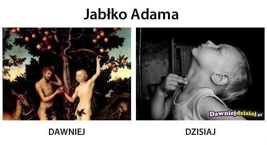 Jabłko Adama –