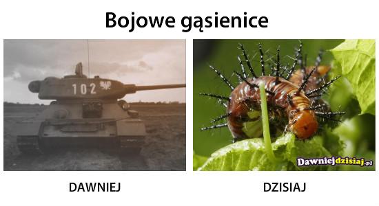 Bojowe gąsienice –
