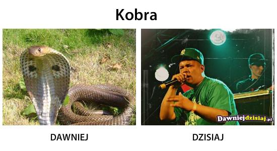 Kobra –