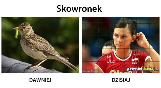 Skowronek –