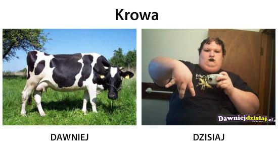 Krowa –