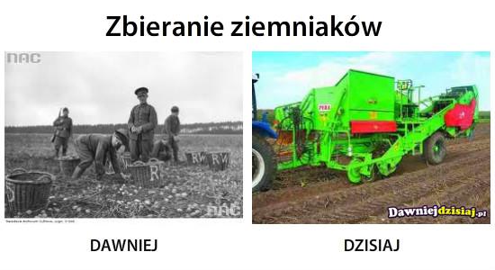Zbieranie ziemniaków –