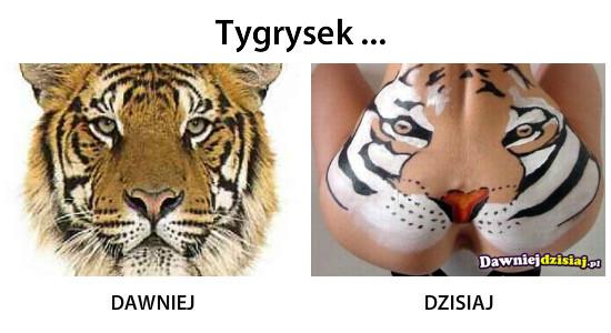 Tygrysek ... –
