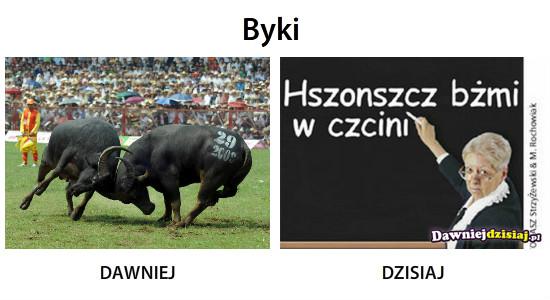 Byki –