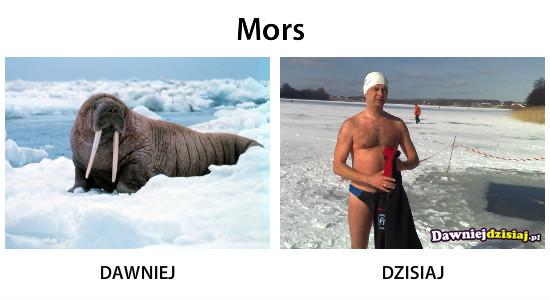 Mors –