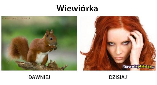 Wiewiórka –