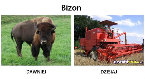 Bizon –