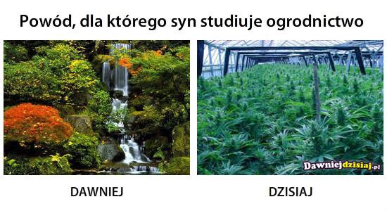 Powód, dla którego syn studiuje ogrodnictwo –