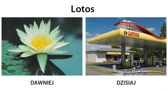 Lotos –