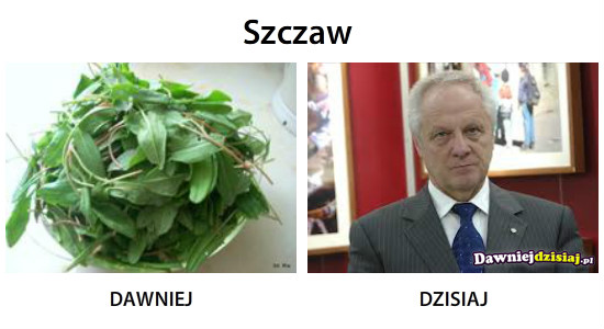 Szczaw –