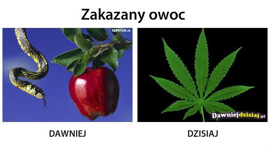 Zakazany owoc –